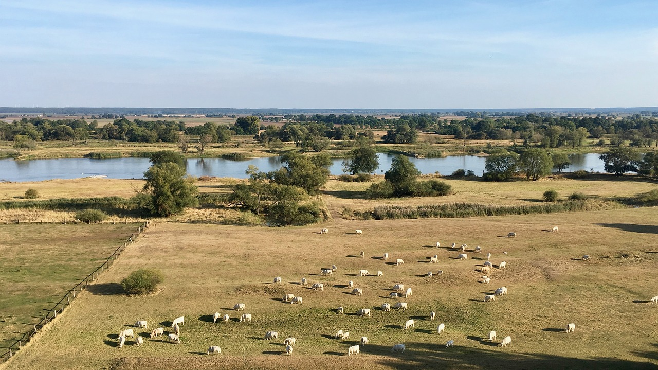 Oderland bei Lebus