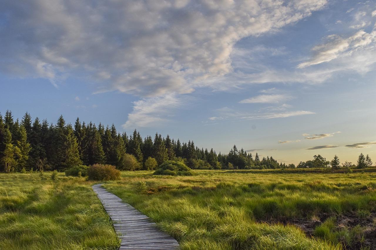 Schwarzes Moor