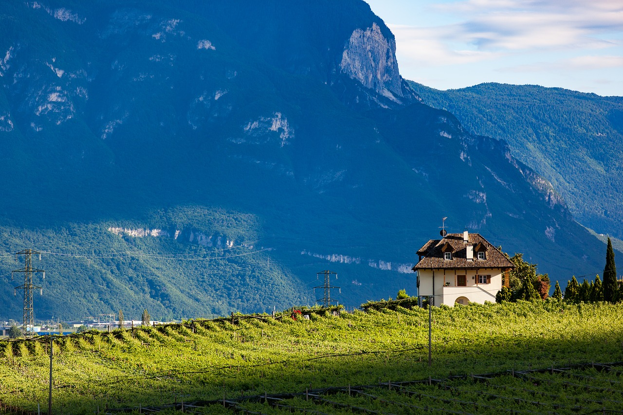 Weinberge bei Brixen